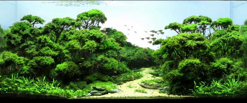 Aquarium Landscape Design Ideas : ?????????????????????? ...